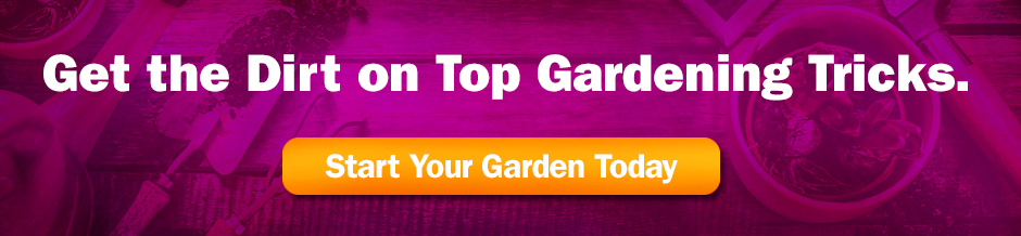 Get the Dirt on Top Gardening Tricks