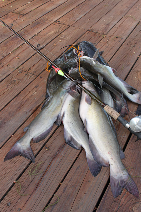 Lindy land for Catfish fishing gear