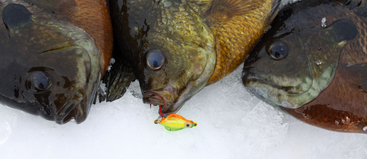 Lindy land maximize your panfish bite for Ice fishing bluegill
