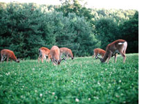 Effective Food Plots