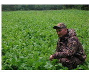 Identify weeds in your food plot