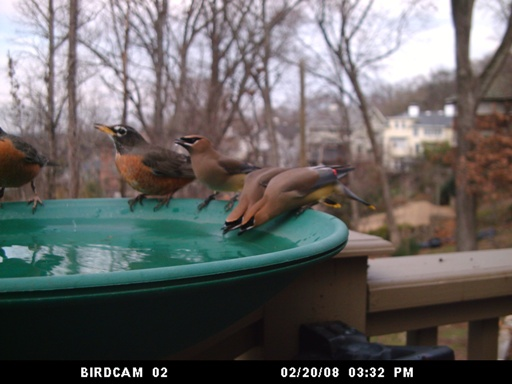 BirdCam Winter Birds