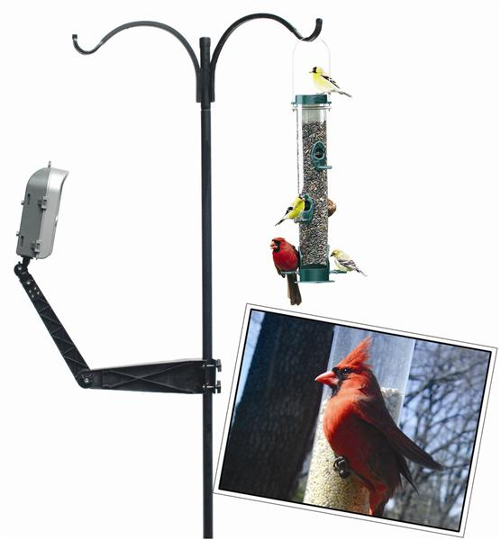 Position the bird camera for cardinals
