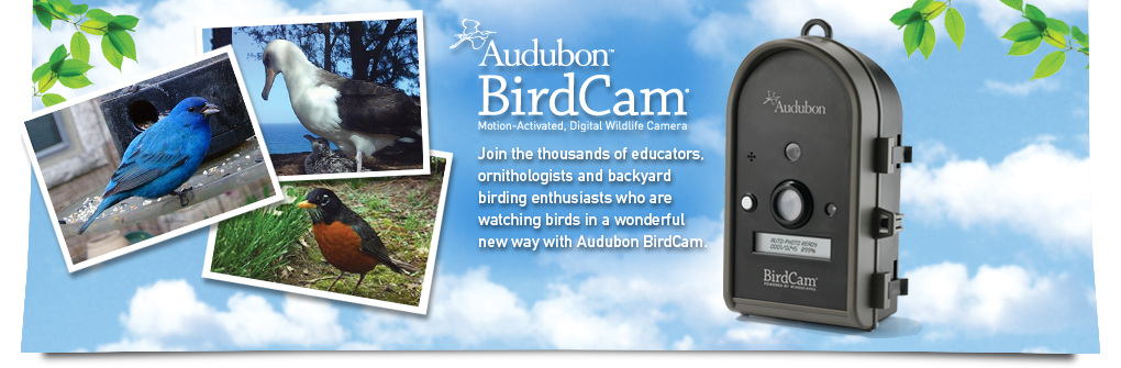 Wingscapes Audubon BirdCam