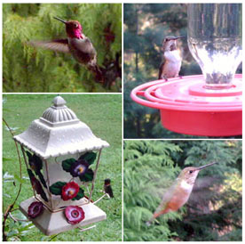 Hummingbird pictures taken with the Wingscapes BirdCam