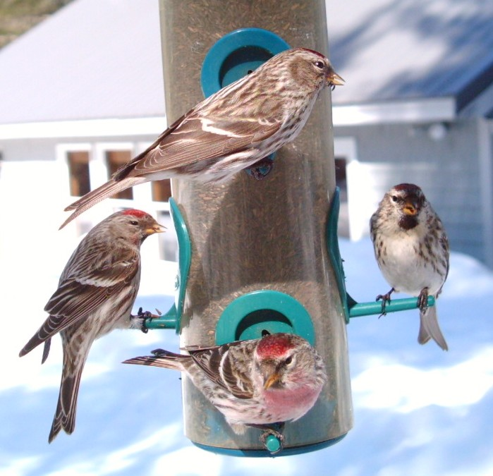 Winter Birds BirdCam photo