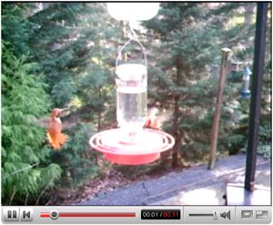 Click to view the Hummingbird Video on YouTube